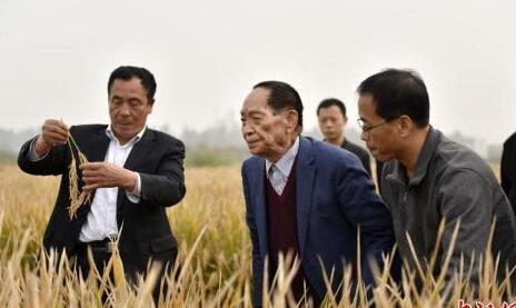 袁隆平将携团队试种耐盐碱杂交水稻 形成技术路线图