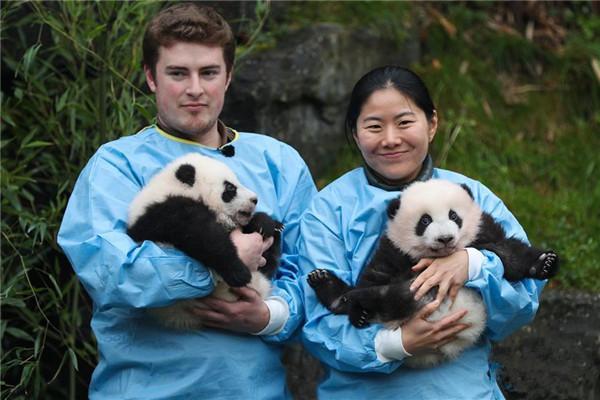 比利时大熊猫双胞胎