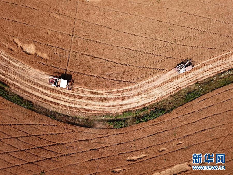 (经济)(6)安徽:小麦收割忙